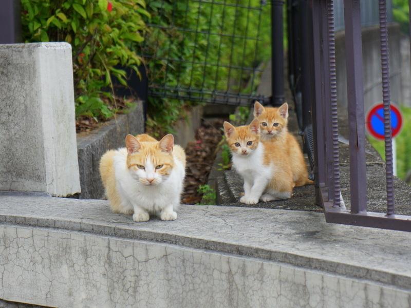ネコの親子001.jpg