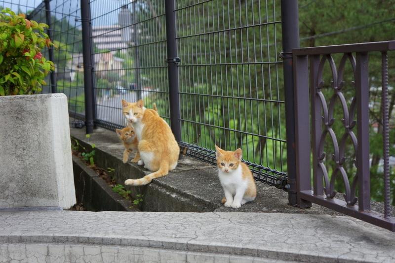 ネコの親子003.jpg