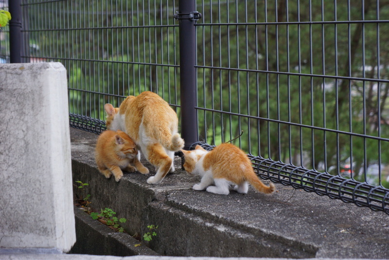 ネコの親子004.jpg